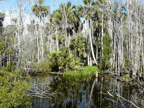 Hickory Mound Wildlife Management Area -- north Florida
