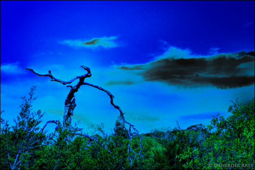 blue trees tree night dark oak shakespeare oaktree hdr macbeth photomatix 3exp nx2 deadoaktree oxherder
