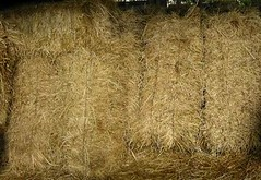agriculture, straw, hay, grass, plant,