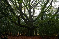 Sortie Forêt de Brocéliande