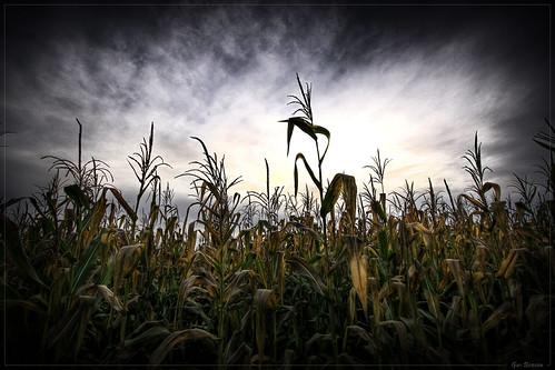autumn winter fall halloween clouds corn cornfield matthew benson fp frontpage hdr efs1022mm vigenette mywinners canoneos50d flickraward gusbenson
