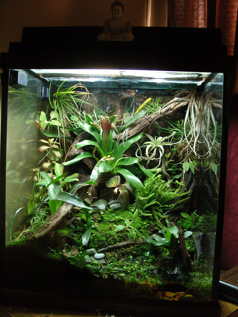 Problems with zoomed mopani wood for Cloudy fish tank water in established tank