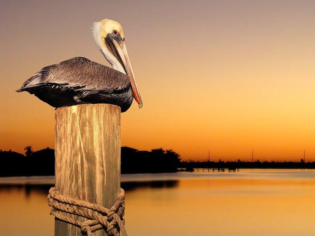 pelicanBay1
