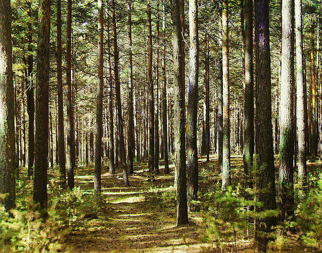 Forest, 1910