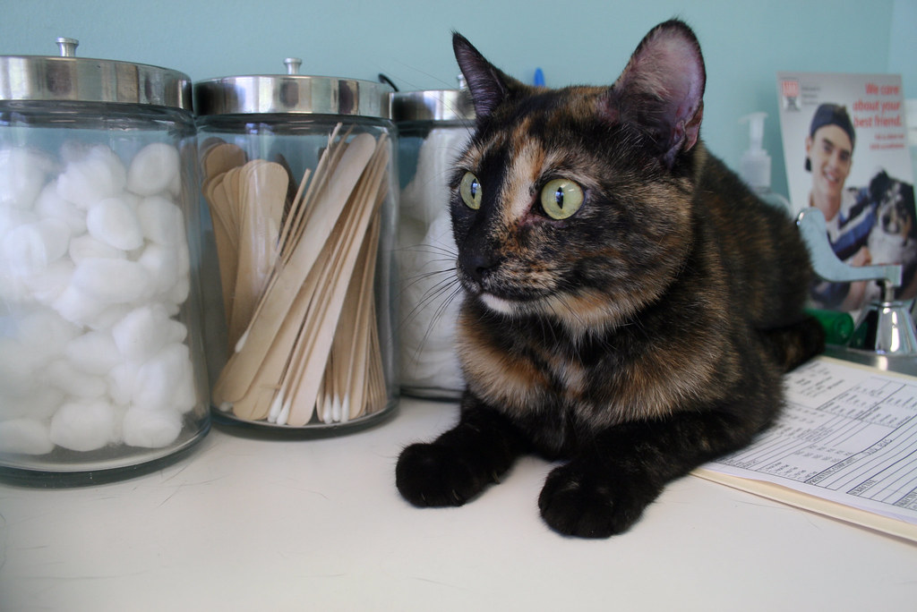 Image result for cat at vet
