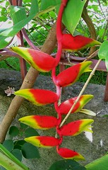 produce(0.0), flower(1.0), plant(1.0), flora(1.0), heliconia(1.0),