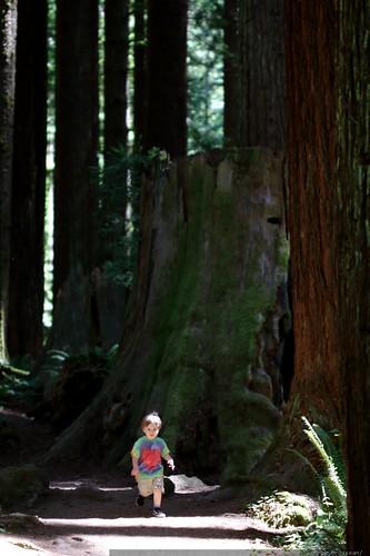 walking in the humboldt redwoods    MG 1029