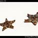Starfish, Isla Mujeres (2)