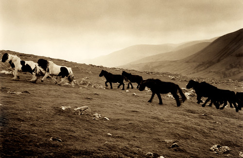 running horses, Fell End Clouds, Wild Boar Fell