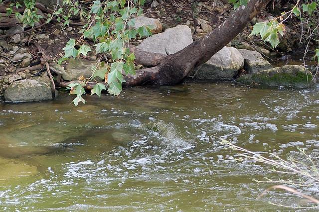 bull creek park tx usa flickr photo