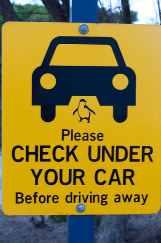Driving in Australia - don't hit the penguins sign!