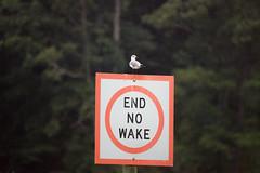 Gull on sign at Bennett's Creek Park