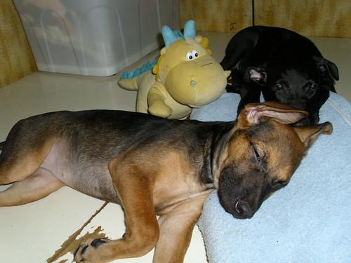 伤残动物救援|流浪动物送养|动物保护意识生命教育