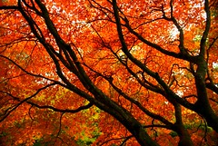 Orange Autumn Branches