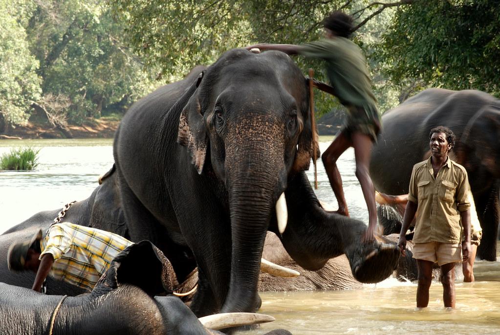 Climbing on Top of An elephant - Dubare Elephant Camp