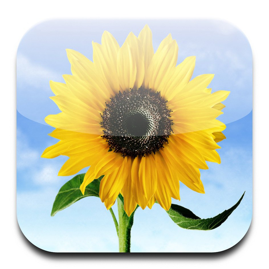 iphone photos iPhone icons sunflower   171  lessIphone Icon Png