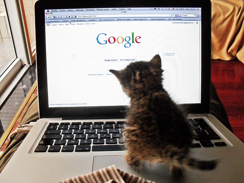 kitten on a laptop looking at a Google branded screen