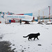 Coney Island in the Snow by Barry Yanowitz
