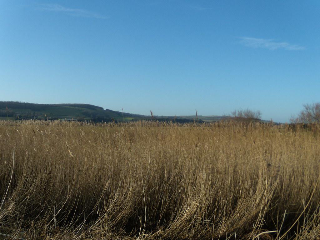 Reeds Arundel Circular
