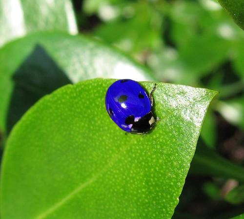 how to start a ladybug farm