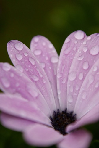 macro water closeup purple drop pearl