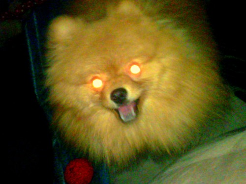 Evil Merlin Camera Phone Flashes And Dog Eyes Dont Mix W Flickr
