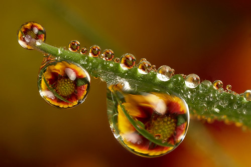 Amazing Beautiful Macro Photography by Brian Valentine