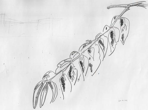 Ilustración: rama del melocotonero en septiembre