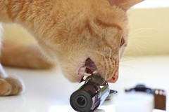Cats against analog photography