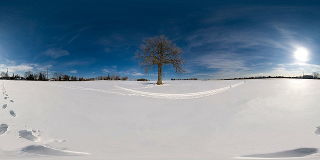 Lone Tree in Markham - Winter