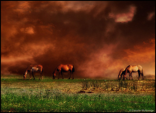 "horses santafe color argentina grass clouds landscape caballos bravo sony pasto nubes chapeau topf150 dsc pampa tlc h9 ogm 333views blueribbonwinner otw littlestories cruzadas justimagine hongkongphotos flickrsbest laclassenonèacqua bej specialtouch worldbest platinumphoto impressedbeauty visiongroup crystalaward citrit ysplix theunforgettablepictures newacademy overtheexcellence goldsealofquality betterthangood proudshopper theperfectphotographer goldwildlife goldstaraward world100f picswithsoul multimegashot sognidreams overtheshot photoexel obq claudioar claudiomufarrege goldenart phvalue artofimages novavitanewlife sensationalphoto specialspictures ""flickraward"" thedantecircle bestcaptureaoi graphicmaster imagesforthelittleprince capturethefinest musicsbest visionquality100 innamoramiento sailsevenseas peregrino27newvision"
