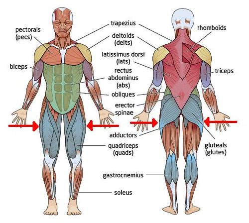 Butt Muscles 74