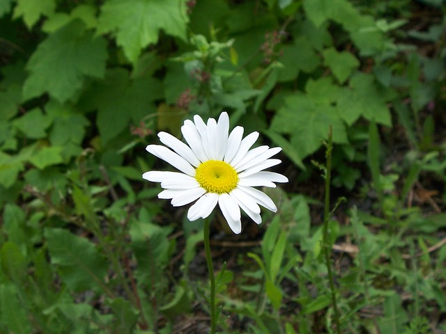 daisy on the taughannock falls trail