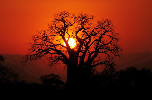 無料写真素材, 自然風景, 朝焼け・夕焼け, 樹木, 橙色・オレンジ, 風景  タンザニア