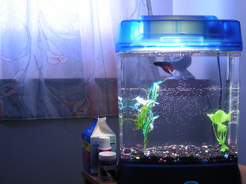 Cycling a small aquarium fish care for Good fish for small tanks