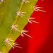 Cactus on Red