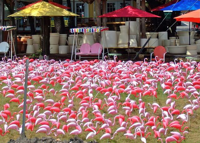 Flamingo Revolt
