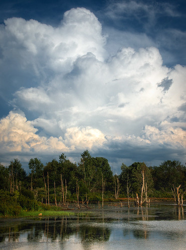 Clouds and Tree Line