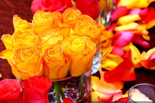 roses    MG 2224