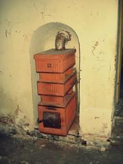 Cold stove