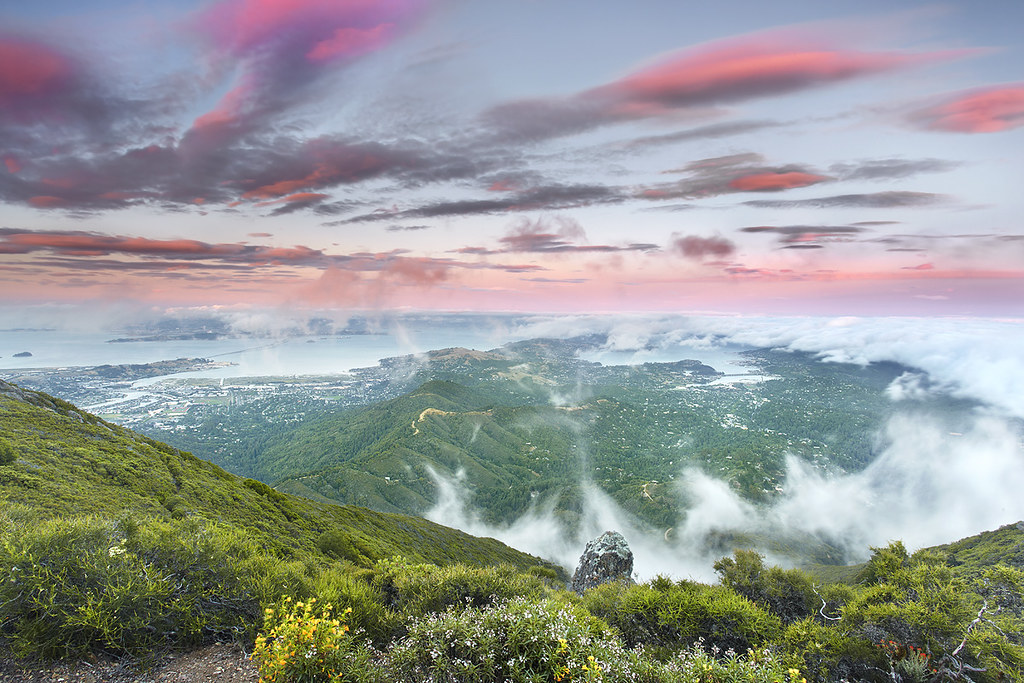 Tamalpais Glory - Marin County, California