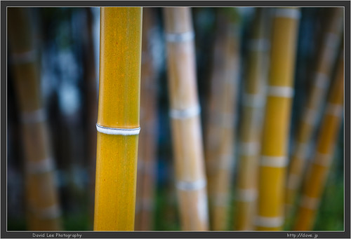 A photo a day: Bamboo
