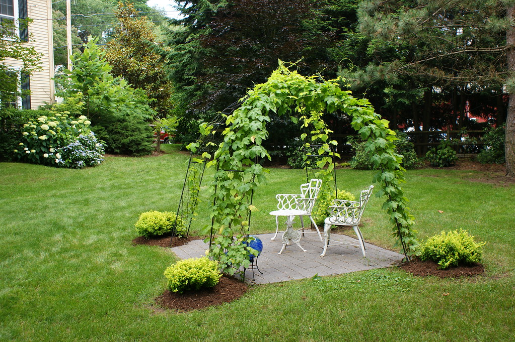 1000 ideas about hops trellis on pinterest trellis for Hops garden designs