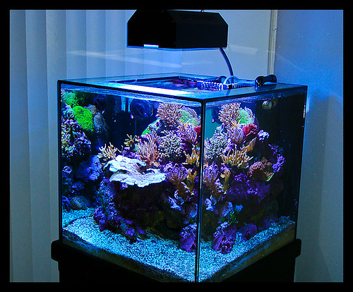 cube fish tanks flickr photo sharing