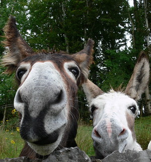 Thank donkey it's Friday!