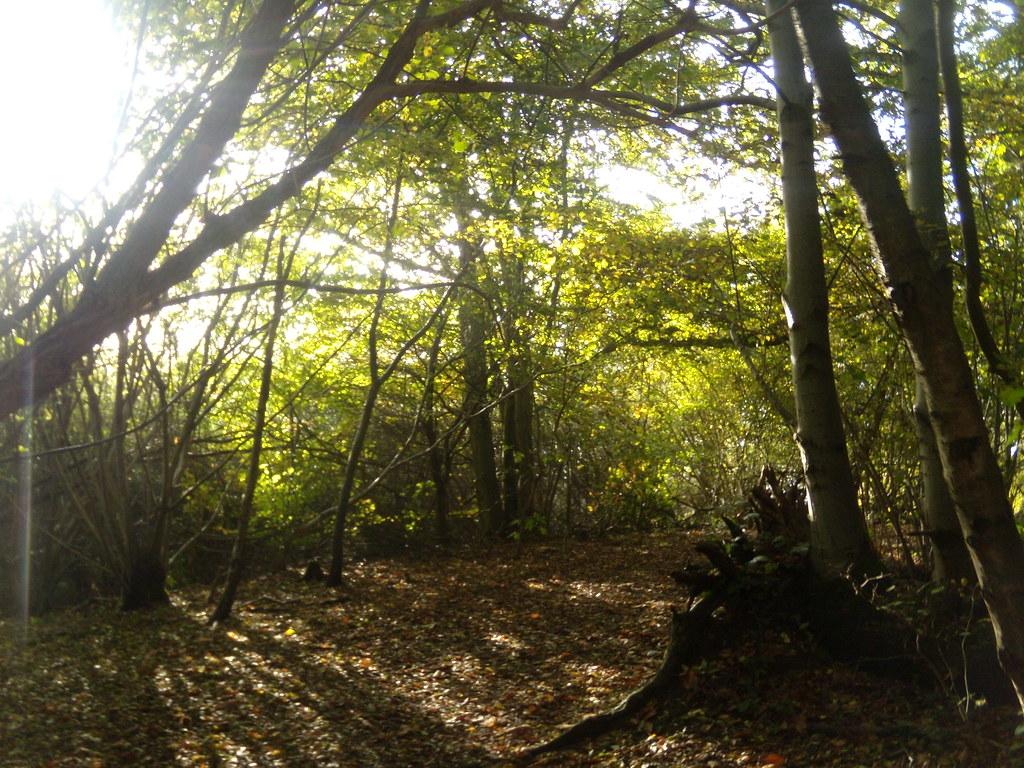 Light through trees Sevenoaks Circular