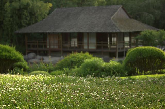 Jardin japonais toulouse paquerette flickr photo sharing for Jardin japonais toulouse