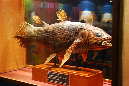 East London Museum Coelacanth