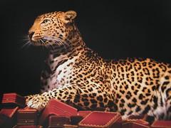 Cartier Ad