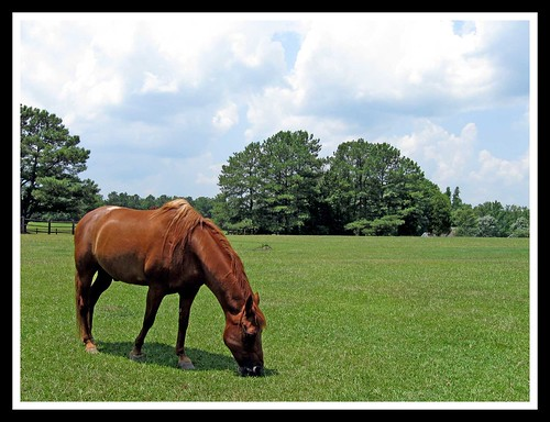 trees horses horse brown grass canon fence powershot pasture pastures equestrian animalplanet a590is